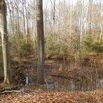 Creek inside the woods