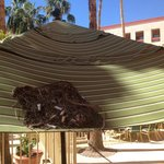 Nest of trash and cigarette butts on the pool umbrella