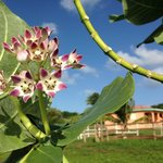 Beautiful flowers adorn parts of the grounds, with casitas in the background