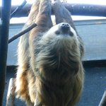 And of course a sloth!