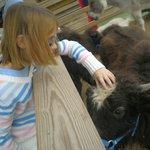 More Petting Zoo