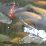 tanque con peces