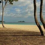 Amazing tree lined beach