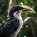 bird on garden tree