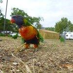 wildlife in the caravan park......