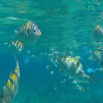 Snorkelling with the fish at the reef and Ancon Beach, Trinidad, Cuba