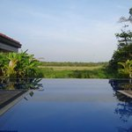 Blick vom Pool ins Reisfeld