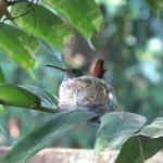 A HUMMINGBIRD IN OUR GARDEN