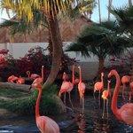 Sitting next to the flamingo habitat.