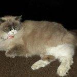 Matilda the resident cat!
