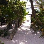 Sandy path through paradise