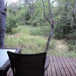 View from back deck with friendly nyala passing by