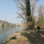 NATUR bei Zurzach am Rhein