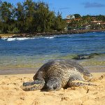 turtle laying on beach