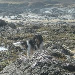 Oscar exploring the rockpools
