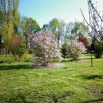 Dans le parc au printemps, magnolias