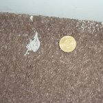 Dirt dislodged by management following room Clean!