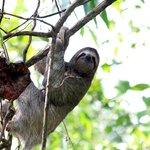 Mr. Sloth - poolside