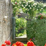 un vieux mur au milieu des roses
