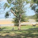 Foto de North Coast Holiday Parks Moonee Beach