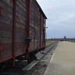 Birkenau train cars