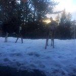 Deer outside the patio doors