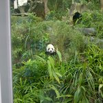 Panda Exhibit - Outdoor Section