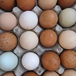 Fresh eggs from our own chickens daily