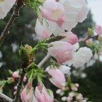 Spring blooms at the Inn at Cobbler's Walk