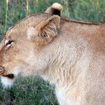 What you can expect to see on your Schotia Safari with the 2 night package