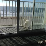 """Our dog Dallas on the landing, """"yes you can bring your dog"""""""