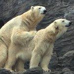 Playing Bears