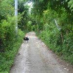Lane near grounds