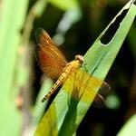 Dragonflies around the villa