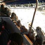Остановка с обезьянками monkey stop