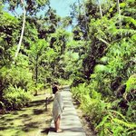 The Jungle Walk that lead to the beach