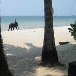 Small elephant visited the beach regularly