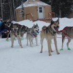 These dogs can't wait to get on the trail.