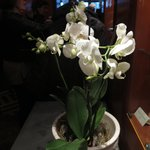 Lovely orchids at the entry