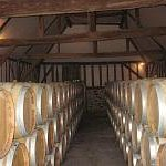 Anjou Village wines ageing in barrels