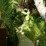 Jungle pathways through grounds