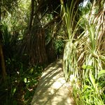 Jungle pathways on grounds