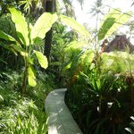 Jungle pathways