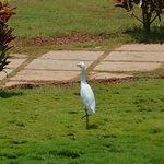 When live white herons decorate, it looks kind of nice?