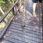 They build the walkways around the vegetation!