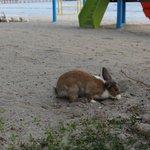 Rabbit appear near dining area