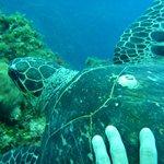 Turtle-Runway Bay, Jamaica