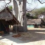 Komfortable Zelte unter dem Baobab