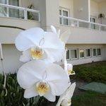 Jardines y orquideas entre las palmeras