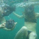 I'm touching a blowfish!